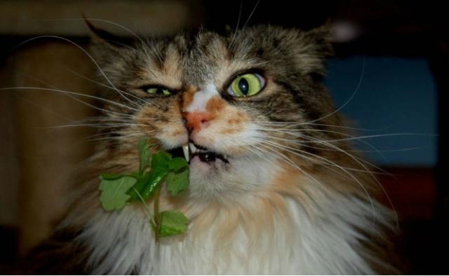 Лучшие шутки о вегетарианцах!