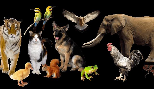 Ученые шокированы — 90% существующих животных появились на планете одновременно