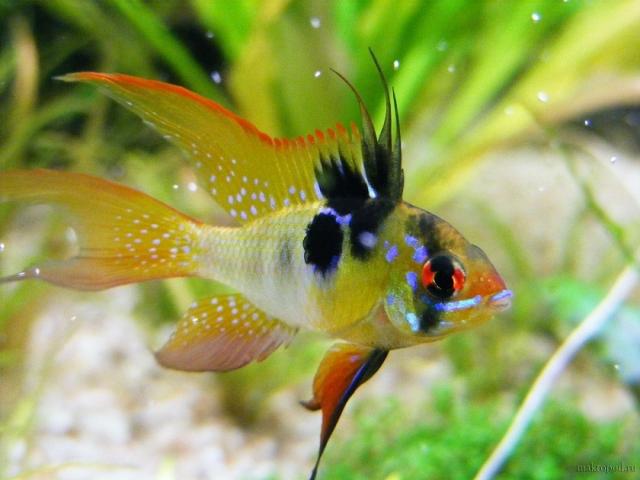 самые красивые рыбы фото