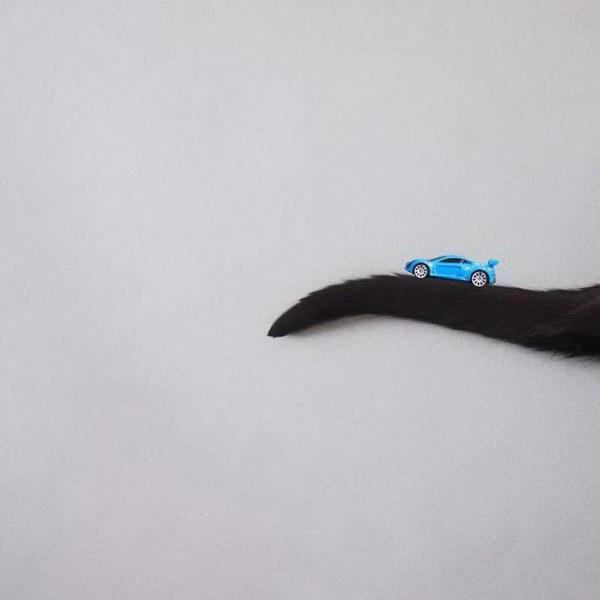 Принцесса Чито – кошка-модель (31 фото)
