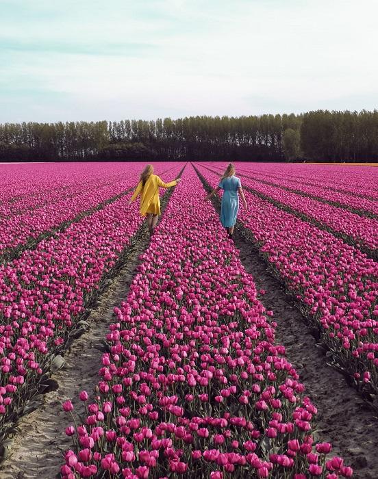 Удивительные цветы стали визитной карточкой маленькой страны Нидерланды.