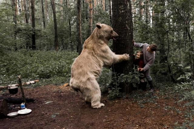 Фото: И тут пришел медведь: сказочная фотосессия семьи, играющей с медведем (Фото)