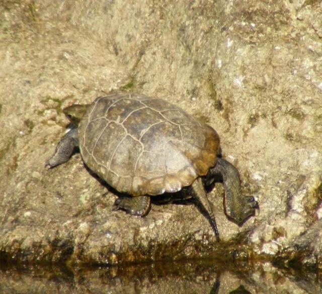 Для одной черепахи должно быть не менее десяти литров воды.