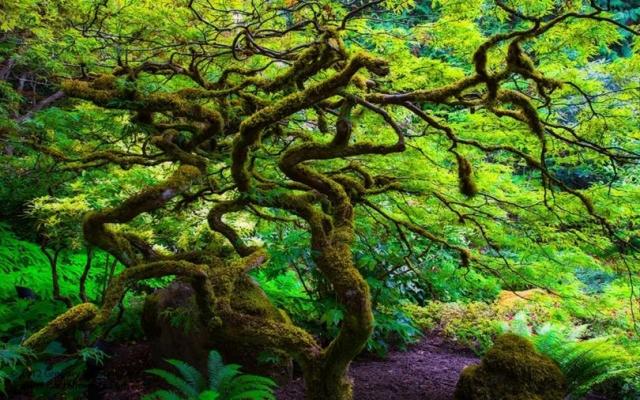 Обои - Природа. Фантастические пейзажи