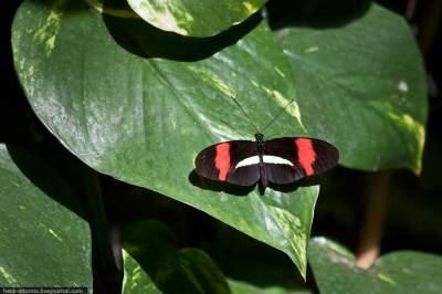Виртуальная прогулка по британскому парку бабочек. Фото