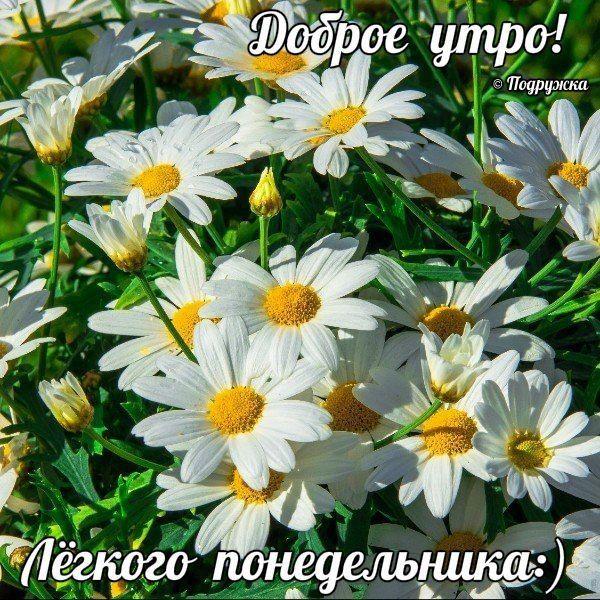 ♥Счастливости♥•~ | Цветы, Ромашки, Красивые цветы