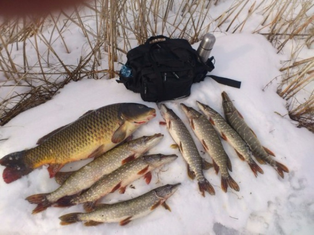 какую рыбу можно поймать в декабре в москве