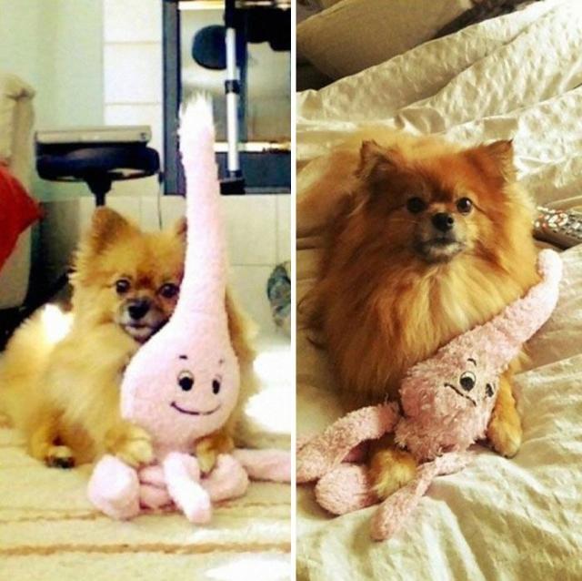 Взрослые животные, которые любят свои игрушки еще с детства (Фото)