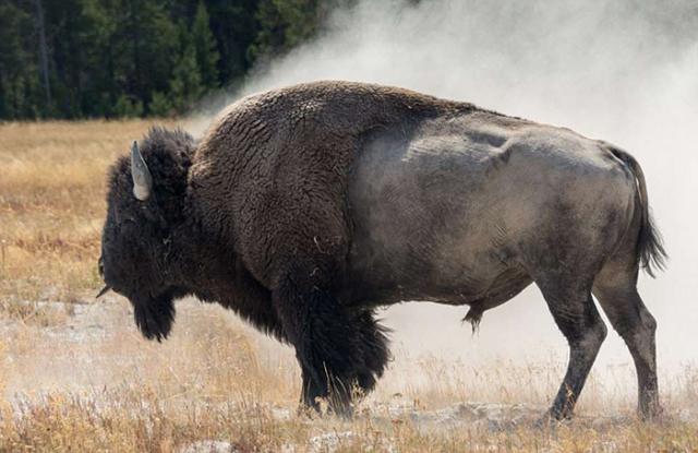 Виллис уже много раз снимал зверей в дикой природе, однако никогда еще не сталкивался с подобной ситуацией.