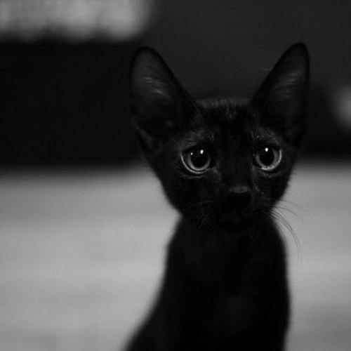 И почему их считают плохои приметои? .Мне неприятности приносят люди, а черные кошки добро и ... - 8