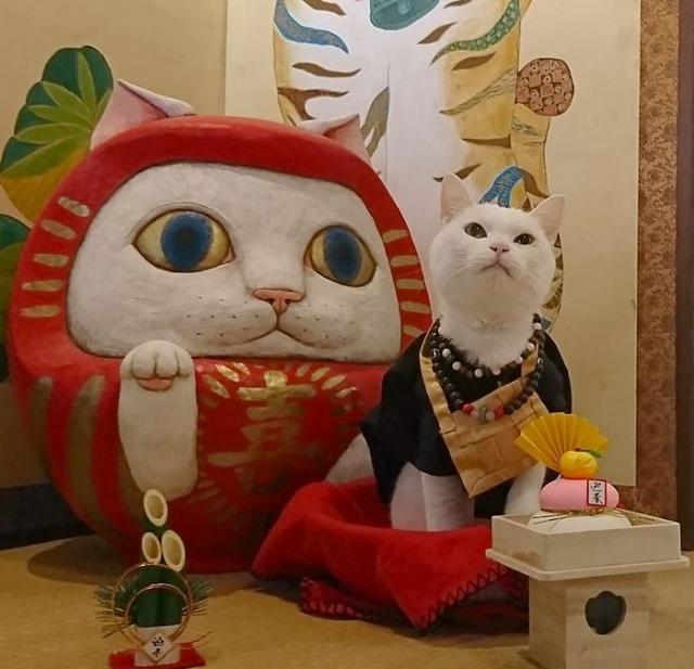 Уникальный кошачий храм, работающий в Японии. Фото