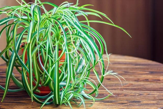 """Результат пошуку зображень за запитом """"Четыре самых неприхотливых растений для детской - фото."""""""