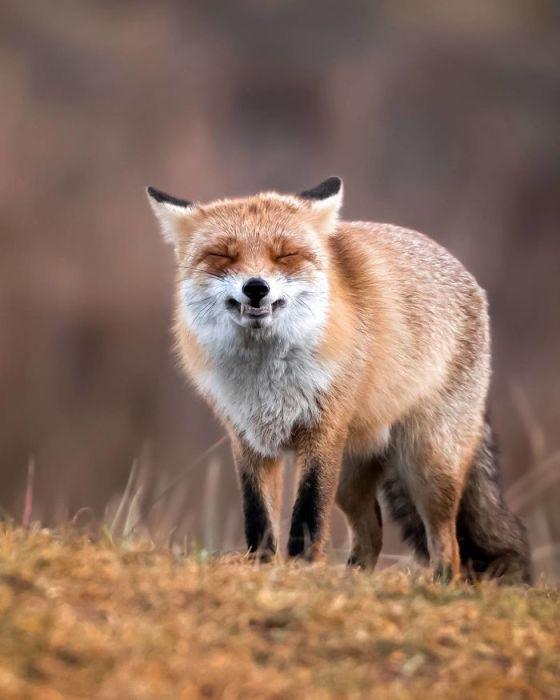 Прекрасное хищное животное, попавшее в фотообъектив.