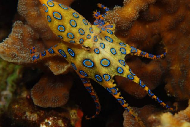 Яйца осьминог носит на своих щупальцах.