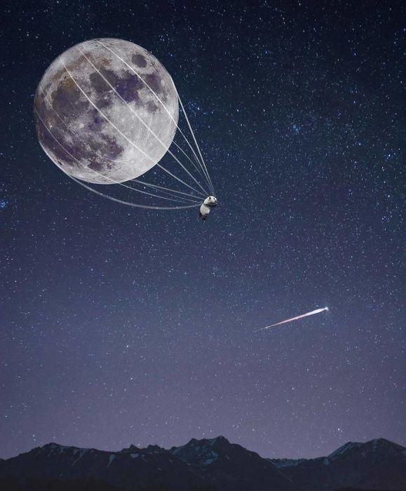 Загадать желание и отправиться на поиски той самой упавшей звезды…