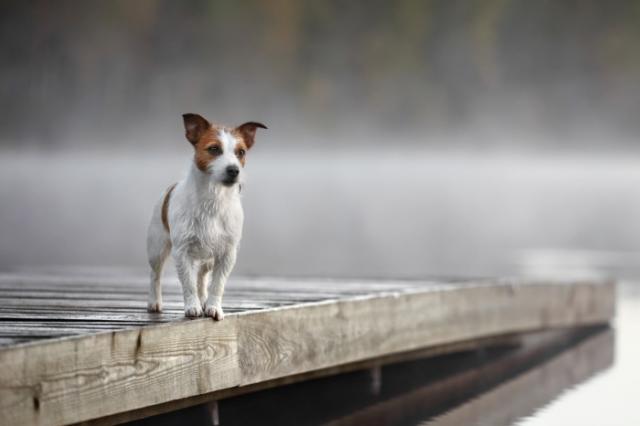 Утро туманное. /  Фото: Надежда Иванова.