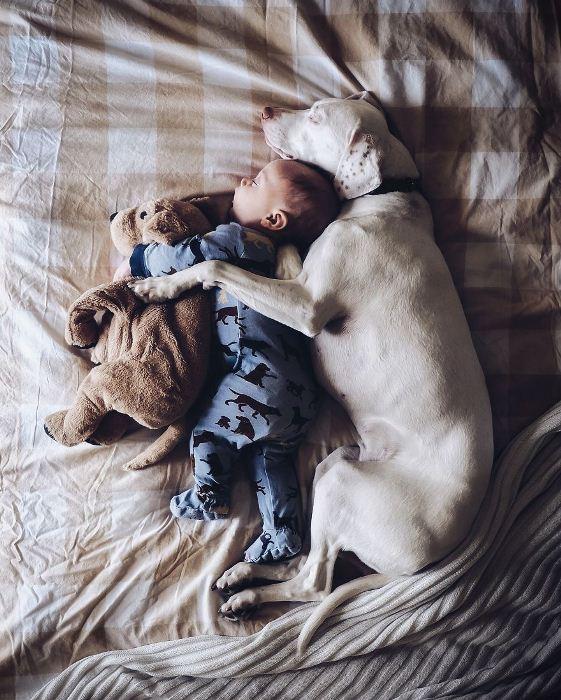 Ребенок и собака. Фото: artfile.ru