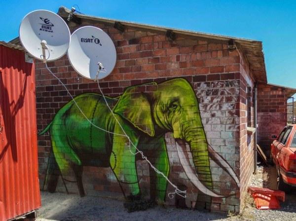 Парень рисует слонов на стенах в Южной Африке (11 работ)
