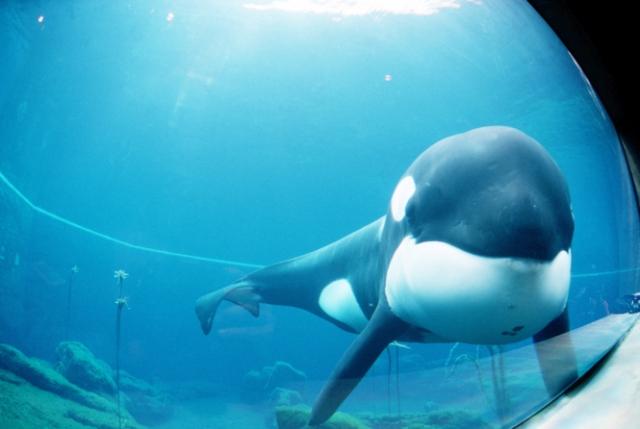 7 животных, которые достигли в жизни большего, чем ты