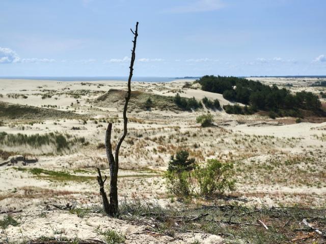 Когда-то здесь жили викинги, а в XIII веке коса стала владением Тевтонского ордена. Спустя еще несколько столетий леса вырубили, и, так как больше ничто не защищало дюны от ветра, горы песка буквально замели поселения полуострова