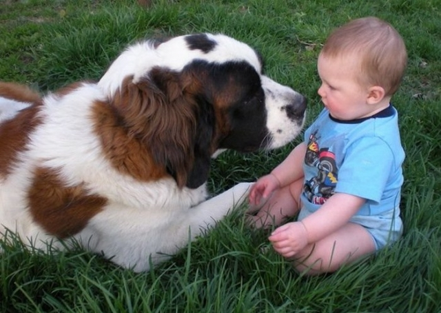 Ребенок и собака. Фото: diary.ru