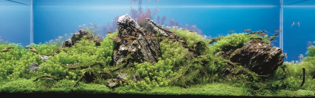 """Результат пошуку зображень за запитом """"Подводный лес и другие акваскейпы."""""""