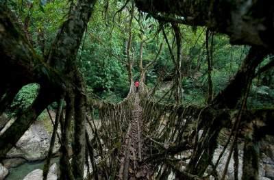 Живые мосты Индии в уникальных снимках. Фото