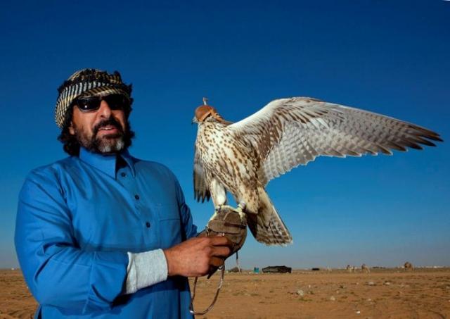 Соколиная охота в пустыне.