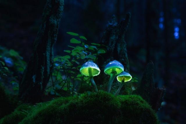 """Результат пошуку зображень за запитом """"светящиеся грибы фото"""""""