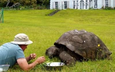 Эту черепаху признают самым старым животным на планете. Фото