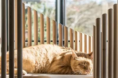 Этот домик для котов стоит целое состояние. Фото