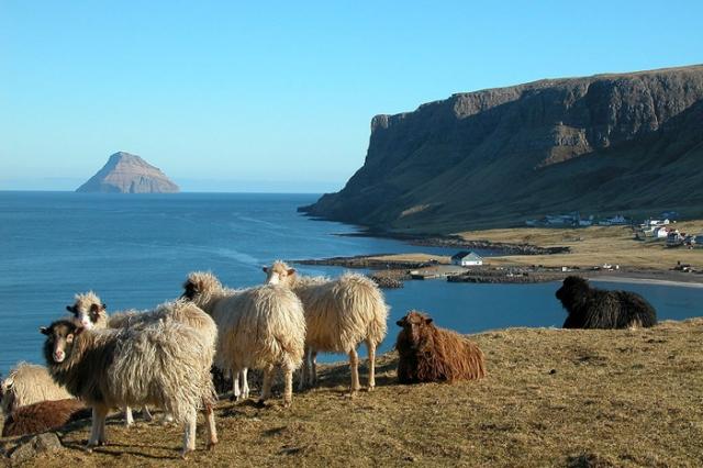 Овцы, пасущиеся в суровых условиях климата Фарерских островов.