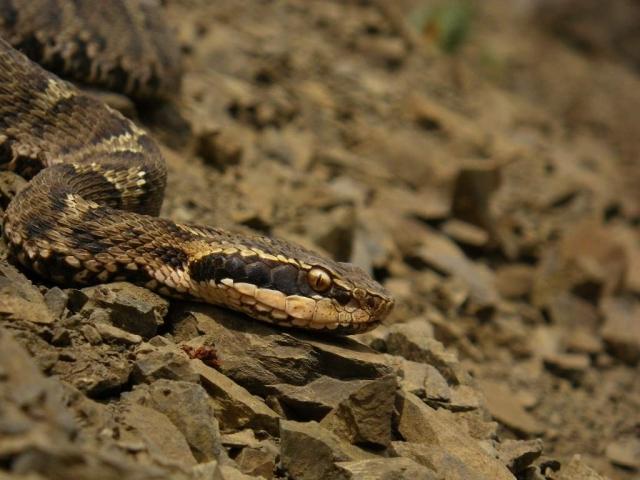 Эти змеи питаются той живностью, которую удается поймать.