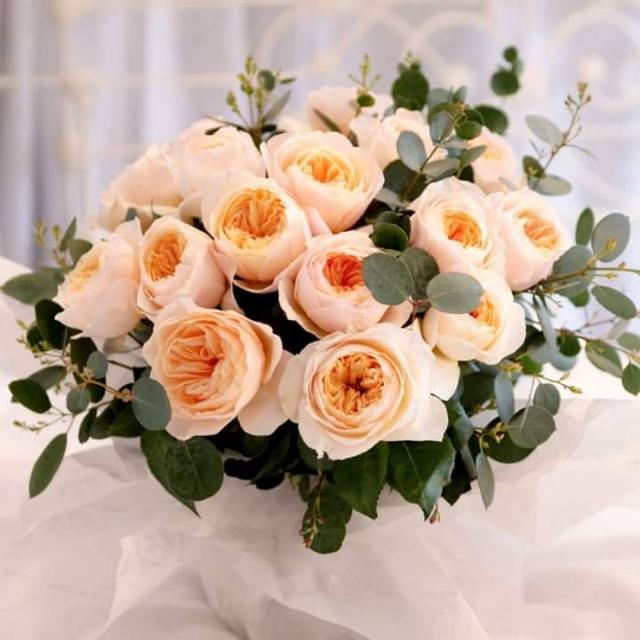 Картинки по запросу роза джульетты