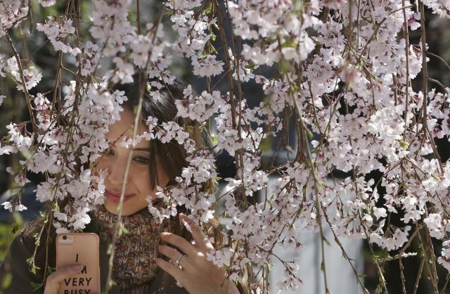 Красоты весны 2018 в фотографиях
