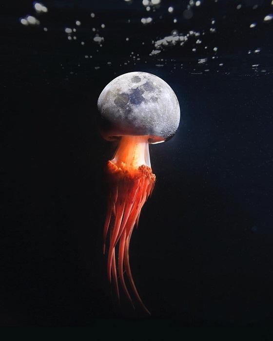 Лунная медуза - очаровательное фантастическое существо подводного царства.