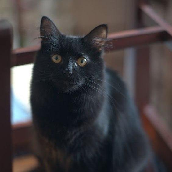 И почему их считают плохои приметои? .Мне неприятности приносят люди, а черные кошки добро и ... - 5