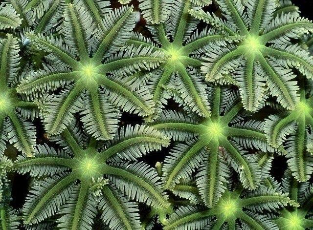 Кораллы - это настоящие морские цветы - 4