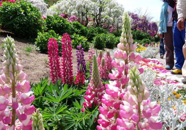 Сад цветов Кавати Фудзи в Японии