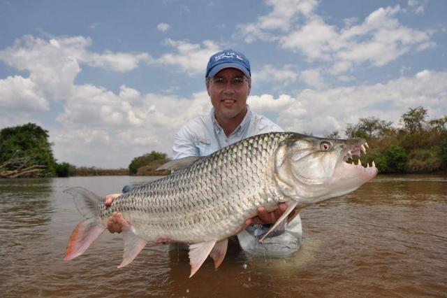 По размерам большая тигровая рыба гораздо больше пираньи.