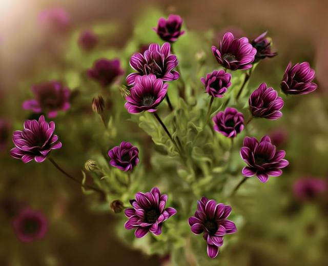 """Результат пошуку зображень за запитом """"Красота цветов в макрофотографии."""""""
