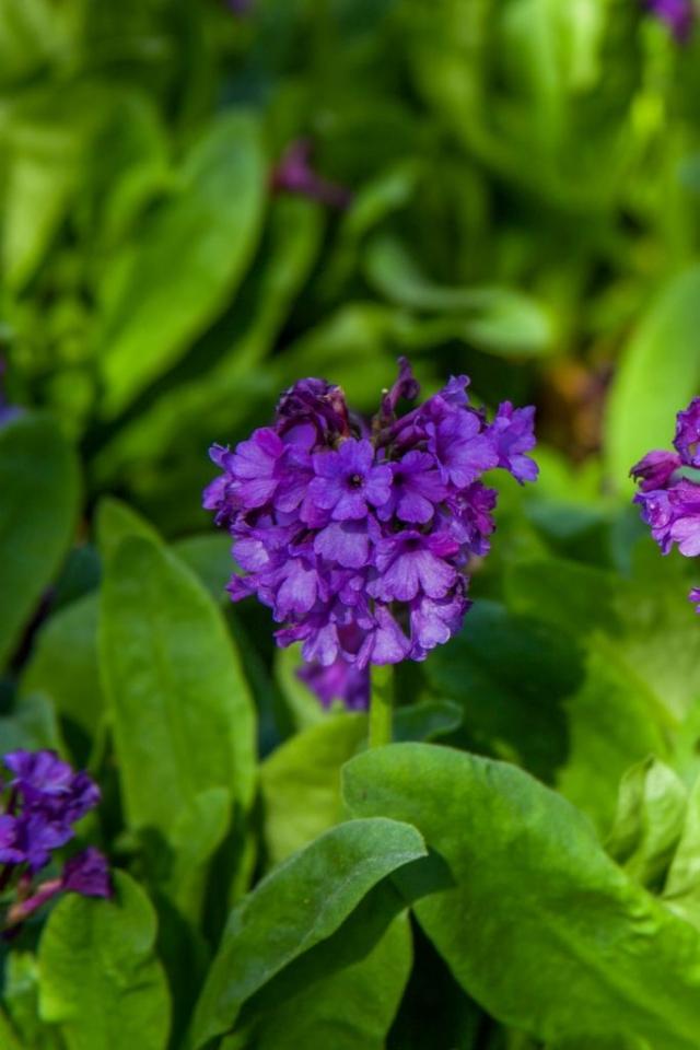 Фото: Тенелюбивые растения, которые поразят вас своей красотой (Фото)