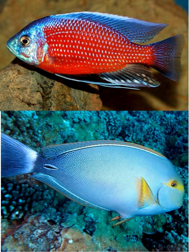 красивая рыба картинка