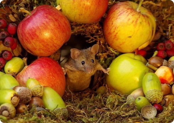 Забавные мышата от фотографа дикой природы Саймона Делла