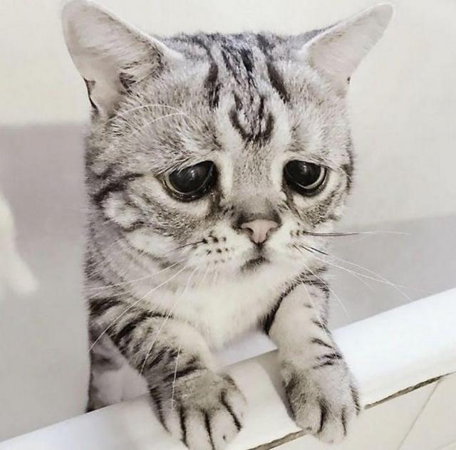 Самая грустая котейка в Интернете