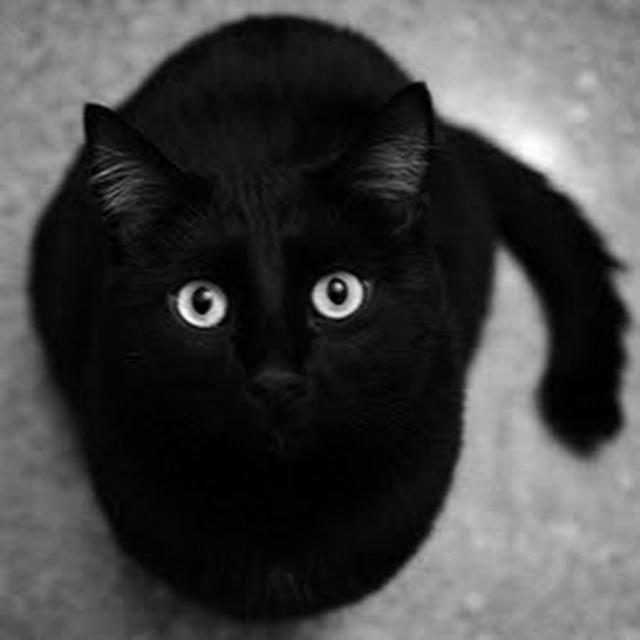 И почему их считают плохои приметои? .Мне неприятности приносят люди, а черные кошки добро и ... - 3