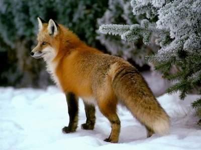Цвет осени: редкие животные рыжего окраса. Фото