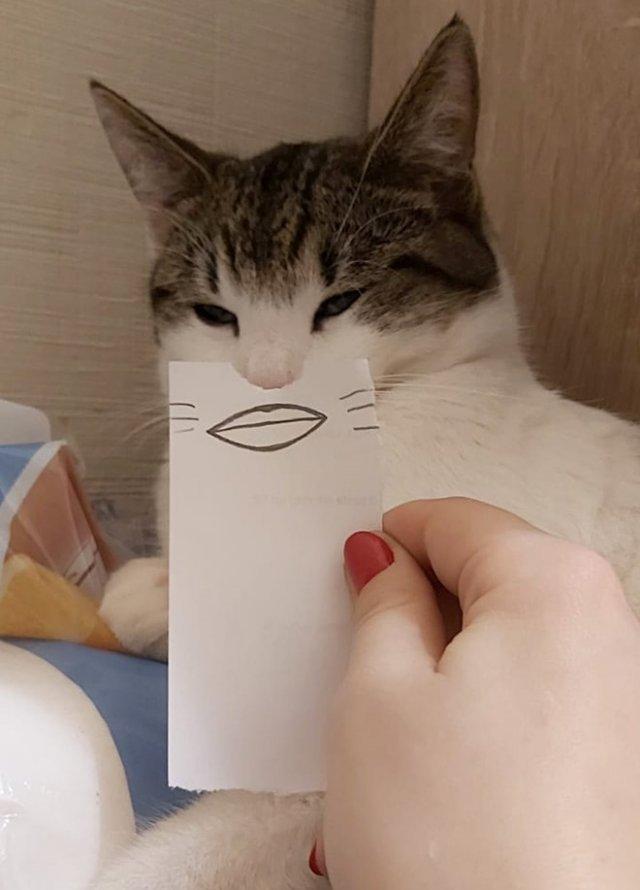 Забавные котики с нарисованными ртами