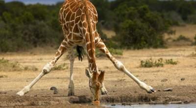 Способности этих животных удивляют даже ученых. Фото