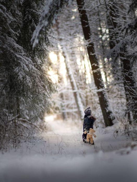 Снежный лес. Автор: Iwona Podlasinska.